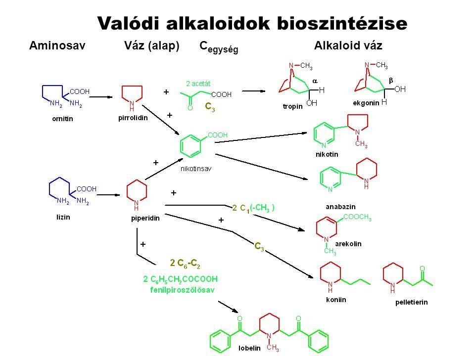 Valódi alkaloidok bioszintézise Aminosav Váz (alap) C egység Alkaloid váz