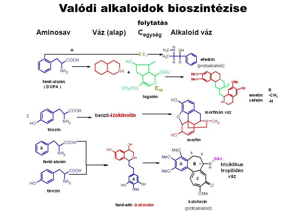 Valódi alkaloidok bioszintézise folytatás Aminosav Váz (alap) C egység Alkaloid váz