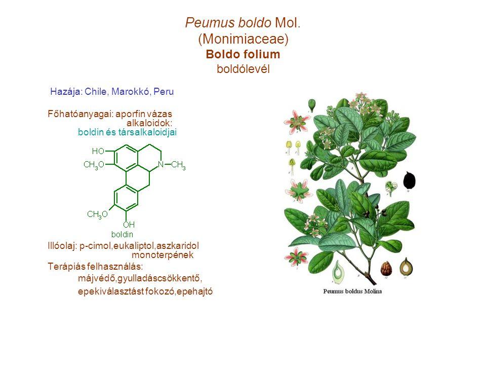 Peumus boldo Mol. (Monimiaceae) Boldo folium boldólevél Hazája: Chile, Marokkó, Peru Főhatóanyagai: aporfin vázas alkaloidok: boldin és társalkaloidja