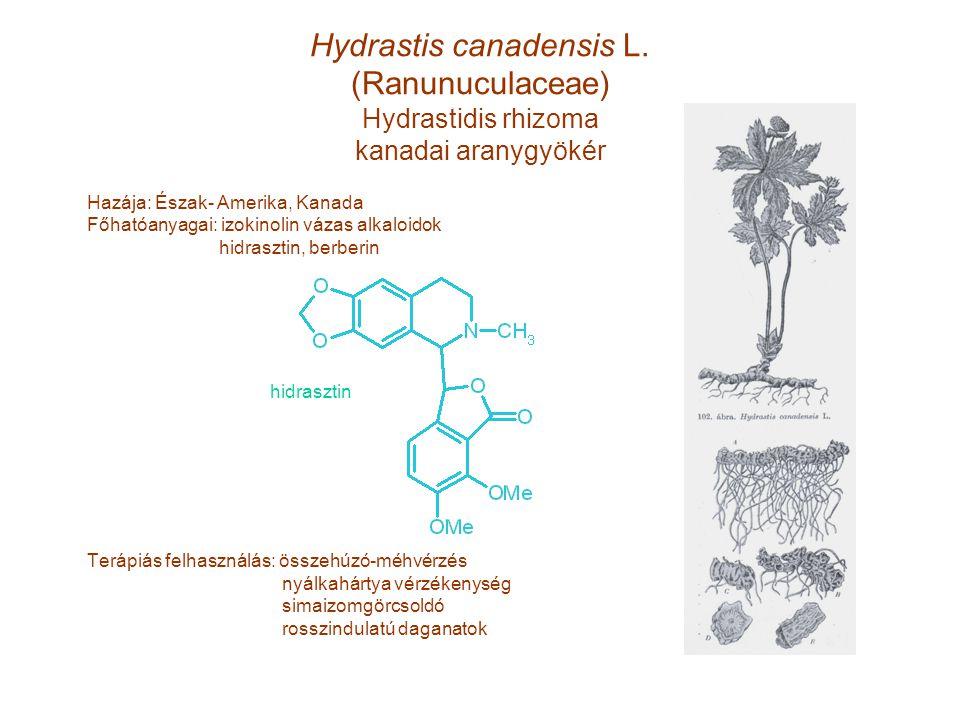 Hydrastis canadensis L. (Ranunuculaceae) Hydrastidis rhizoma kanadai aranygyökér Hazája: Észak- Amerika, Kanada Főhatóanyagai: izokinolin vázas alkalo