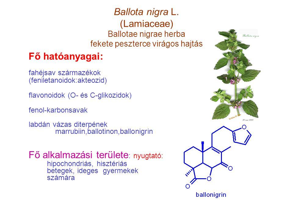 Ballota nigra L. (Lamiaceae) Ballotae nigrae herba fekete peszterce virágos hajtás Fő hatóanyagai: fahéjsav származékok (feniletanoidok:akteozid) flav