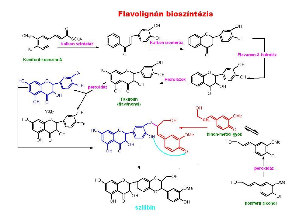 Flavolignán bioszíntézis