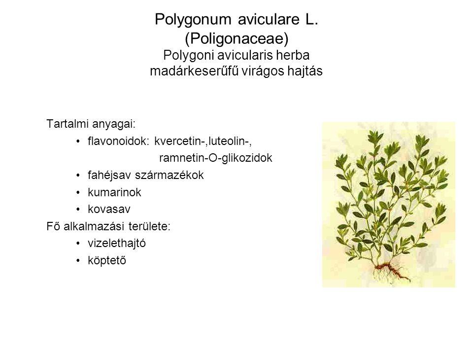 Polygonum aviculare L. (Poligonaceae) Polygoni avicularis herba madárkeserűfű virágos hajtás Tartalmi anyagai: flavonoidok: kvercetin-,luteolin-, ramn