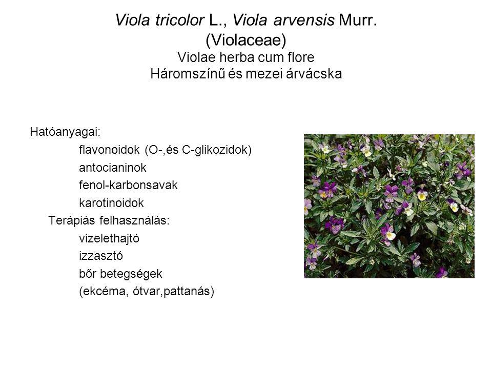 Viola tricolor L., Viola arvensis Murr. (Violaceae) Violae herba cum flore Háromszínű és mezei árvácska Hatóanyagai: flavonoidok (O-,és C-glikozidok)