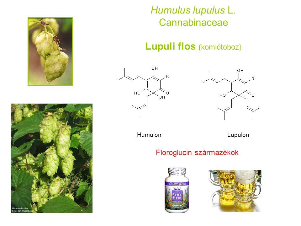 Humulus lupulus L. Cannabinaceae Lupuli flos (komlótoboz) HumulonLupulon Floroglucin származékok