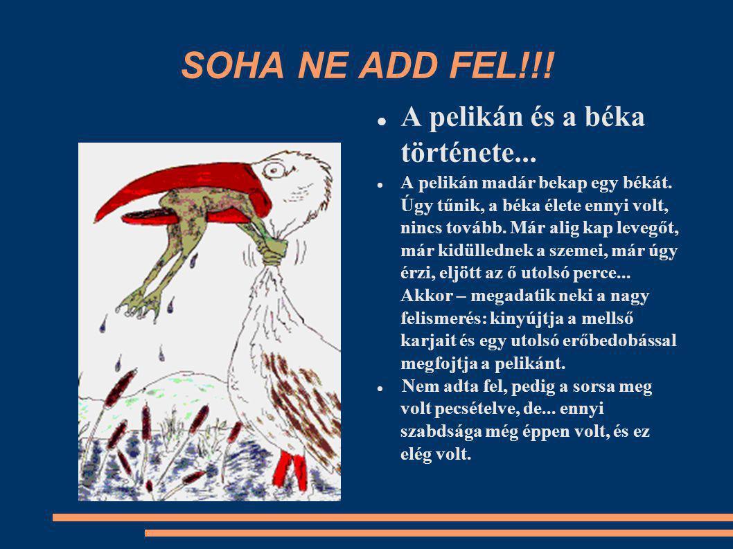 SOHA NE ADD FEL!!. A pelikán és a béka története...