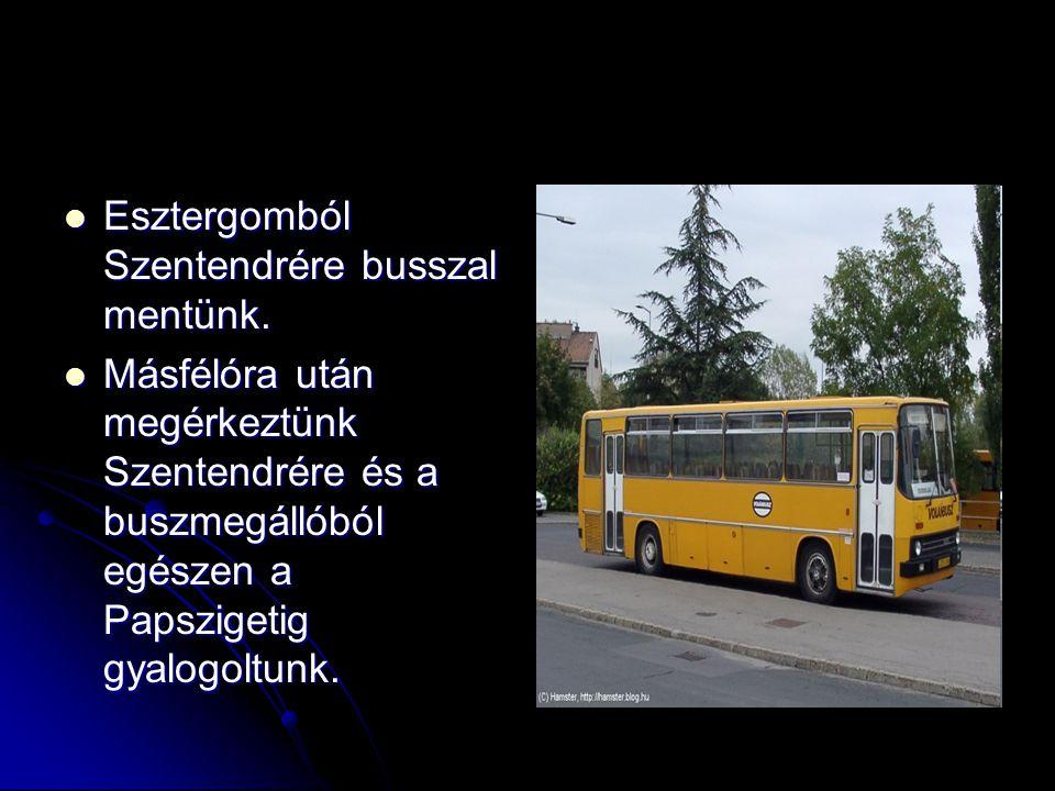 Esztergomból Szentendrére busszal mentünk. Esztergomból Szentendrére busszal mentünk. Másfélóra után megérkeztünk Szentendrére és a buszmegállóból egé