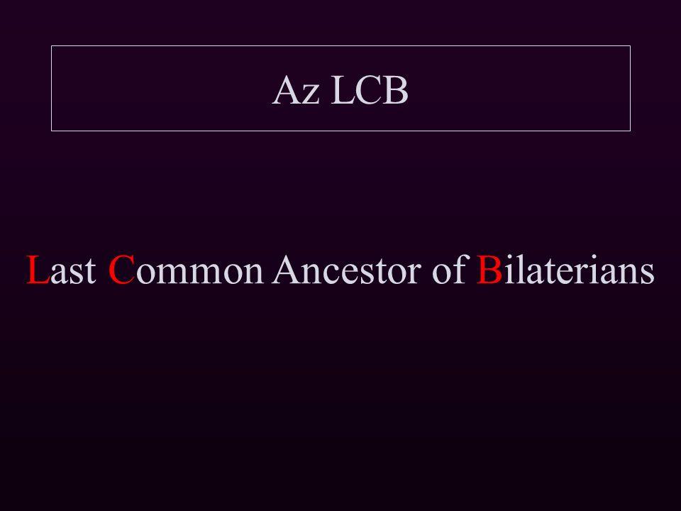 """Az LCB rendszertani helye Haeckel """"biogenetikai alaptörvénye Az egyedfejlődés során a törzsfejlődés főbb lépései megismétlődnek."""