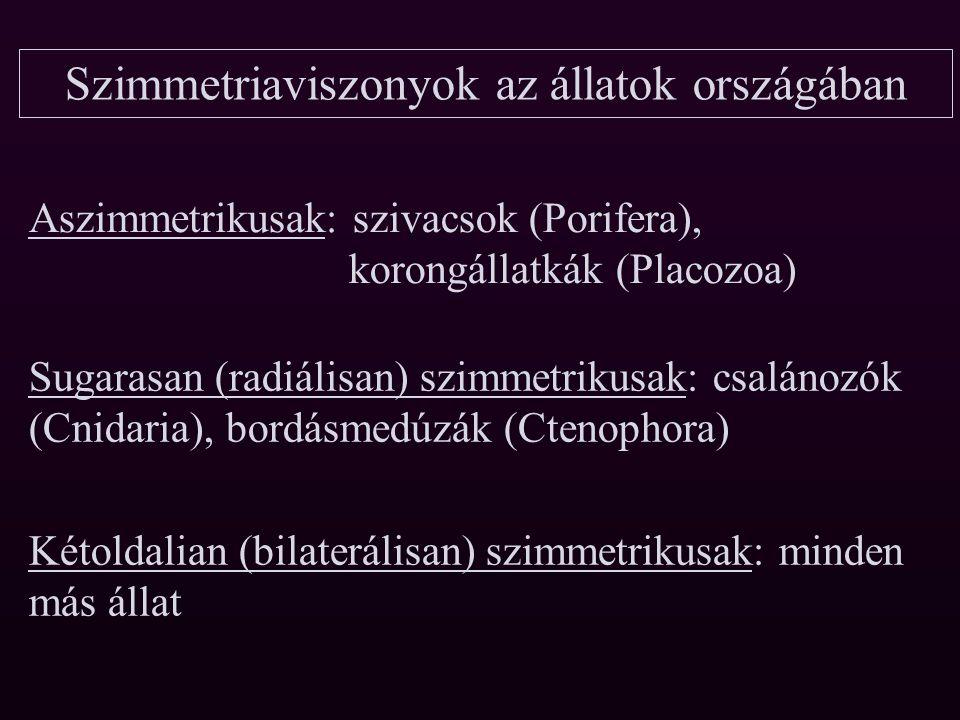 Állatok országa Álszövetesek alországa (aszimmetrikusak) Szövetesek alországa Sugaras szimmetriájúak tagozata Kétoldalian szimmetrikusak tagozata