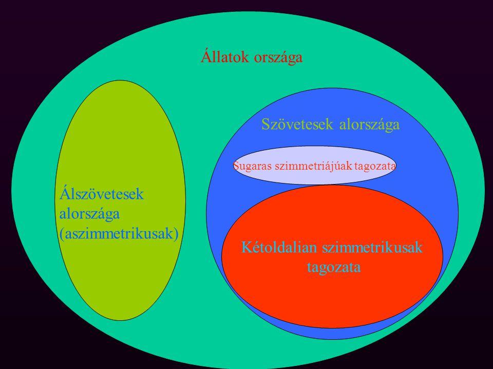 Az aszimmetrikus állatok szivacsokPlacozoa
