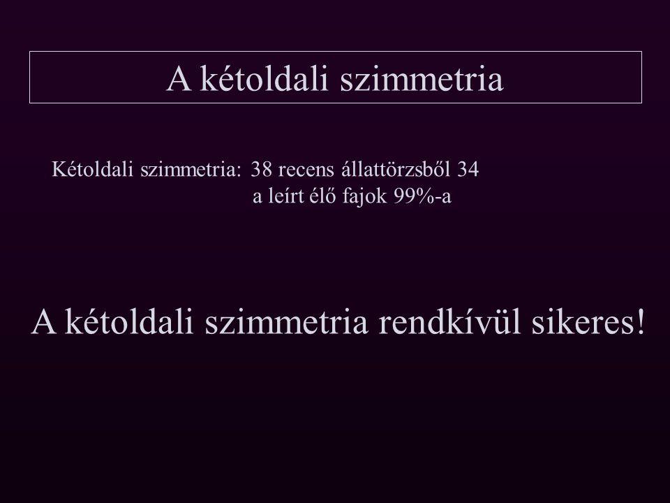 A kétoldali szimmetria Aszimmetria 1.Tengely; elülső hátulsó testvég; sugaras szimmetria (csalánozók) 2.