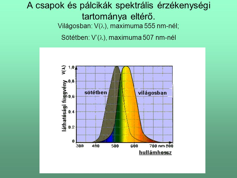 A csapok és pálcikák spektrális érzékenységi tartománya eltérő. Világosban: V( ), maximuma 555 nm-nél; Sötétben: V'( ), maximuma 507 nm-nél