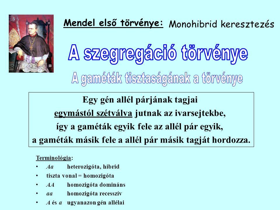Mendel első törvénye: Egy gén allél párjának tagjai egymástól szétválva jutnak az ivarsejtekbe, így a gaméták egyik fele az allél pár egyik, a gaméták