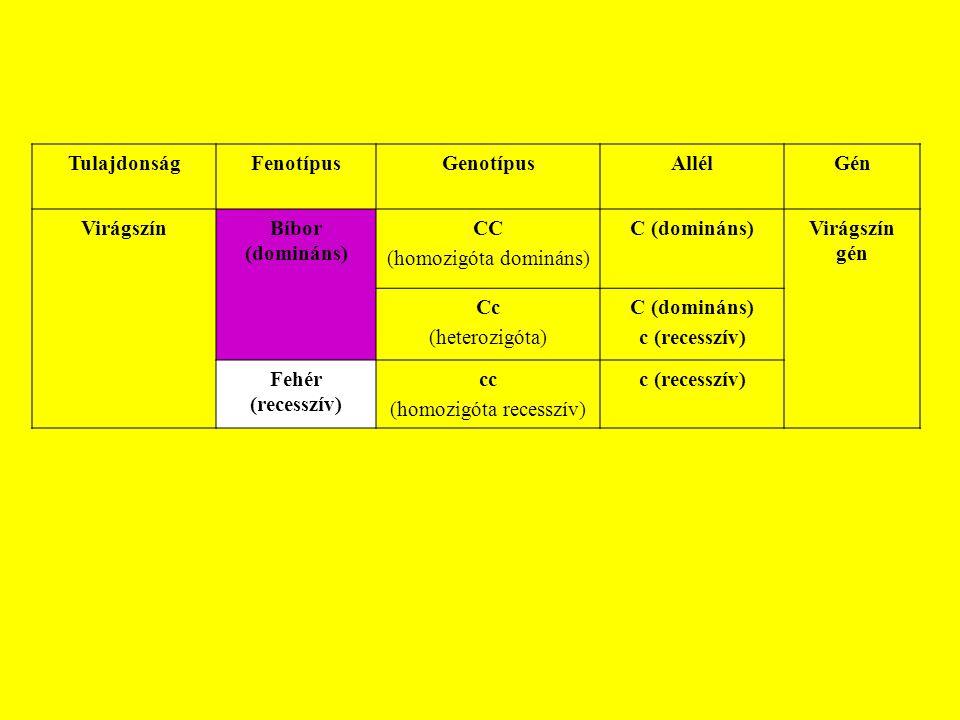 TulajdonságFenotípusGenotípusAllélGén VirágszínBíbor (domináns) CC (homozigóta domináns) C (domináns)Virágszín gén Cc (heterozigóta) C (domináns) c (r