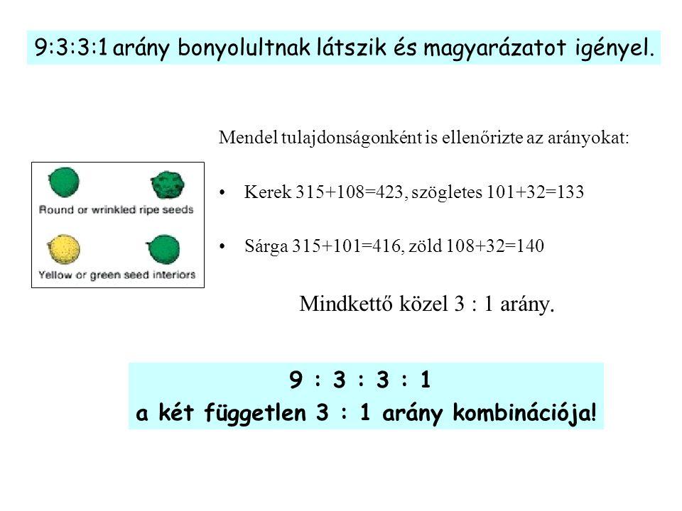 9:3:3:1 arány bonyolultnak látszik és magyarázatot igényel. Mendel tulajdonságonként is ellenőrizte az arányokat: Kerek 315+108=423, szögletes 101+32=