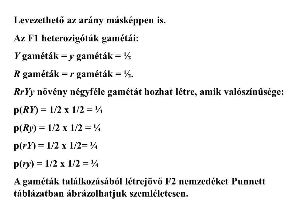 Levezethető az arány másképpen is. Az F1 heterozigóták gamétái: Y gaméták = y gaméták = ½ R gaméták = r gaméták = ½. RrYy növény négyféle gamétát hozh
