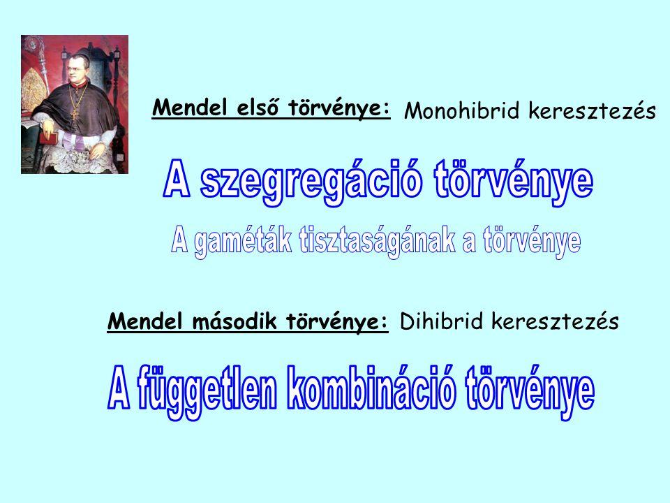 Mendel második törvénye:Dihibrid keresztezés Mendel első törvénye: Monohibrid keresztezés