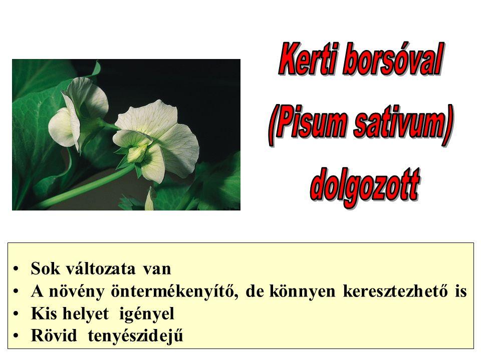 Sok változata van A növény öntermékenyítő, de könnyen keresztezhető is Kis helyet igényel Rövid tenyészidejű