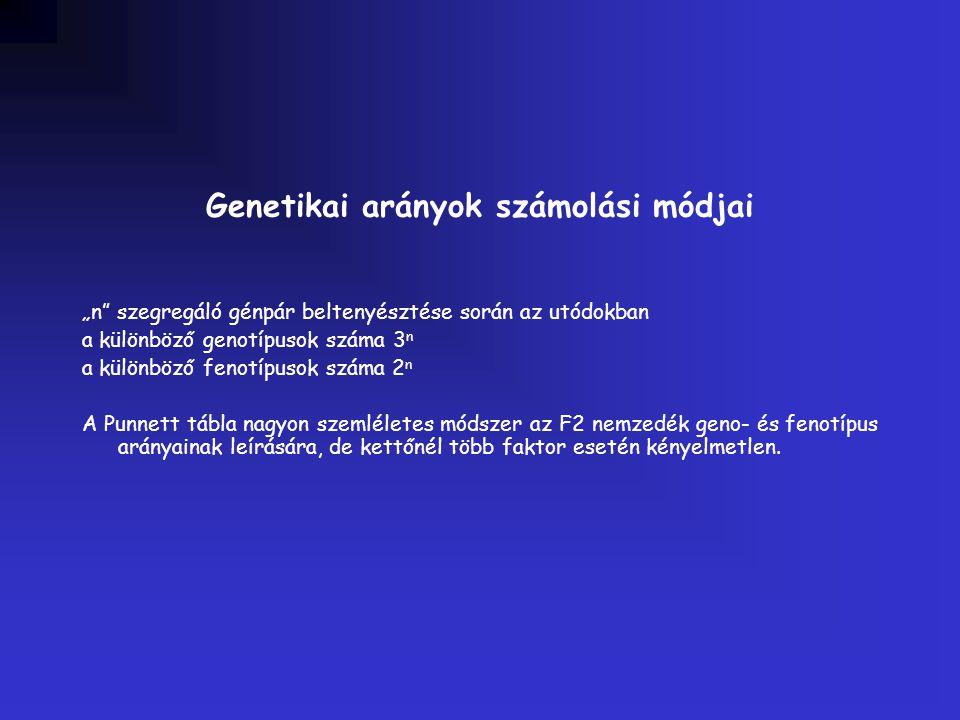 """Genetikai arányok számolási módjai """"n"""" szegregáló génpár beltenyésztése során az utódokban a különböző genotípusok száma 3 n a különböző fenotípusok s"""