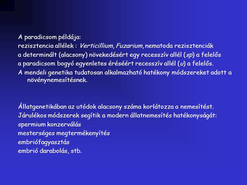 A paradicsom példája: rezisztencia allélek : Verticillium, Fuzarium, nematoda rezisztenciák a determinált (alacsony) növekedésért egy recesszív allél
