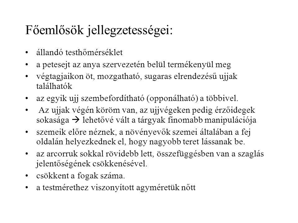 Cebus apella (Bóbitás csuklyásmajom)