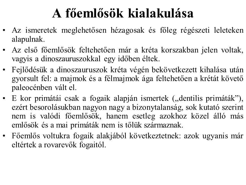 Life span: 27 years (wild) Total population: Unknown Regions: Angola, Democratic Republic of Congo, Ethiopia, Kenya, Malawi, Mozambique, Somalia, Tanzania, Zambia Gestation: 180 days (6 months) Height: 1200 mm (M), 976 mm (F) Weight: 25.8 kg (M), 11.0 kg (F) Diet: flowers, roots, grasses, bark, twigs, sap, tubers, bulbs, mushrooms, lichens, aquatic plants, seeds, shoots, buds, invertebrates P.