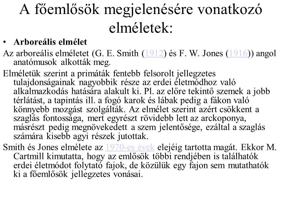 Emberszerűek (Hominoidea) öregcsaládja †Proconsulidae család †Oreopithecidae család † Griphopithecidae család Gibbonfélék (Hylobatidae) családja †Pliopithecinae alcsalád Hylobatine alcsalád Hominidák (Hominidae) családja †Dryopithecinae alcsalád Ponginae alcsalád Homininae alcsalád