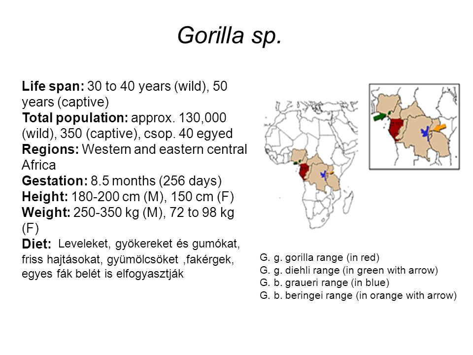 Life span: 30 to 40 years (wild), 50 years (captive) Total population: approx. 130,000 (wild), 350 (captive), csop. 40 egyed Regions: Western and east