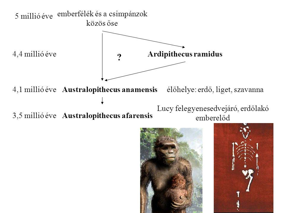 4,4 millió éveArdipithecus ramidus 5 millió éve emberfélék és a csimpánzok közös őse 4,1 millió éveAustralopithecus anamensis .