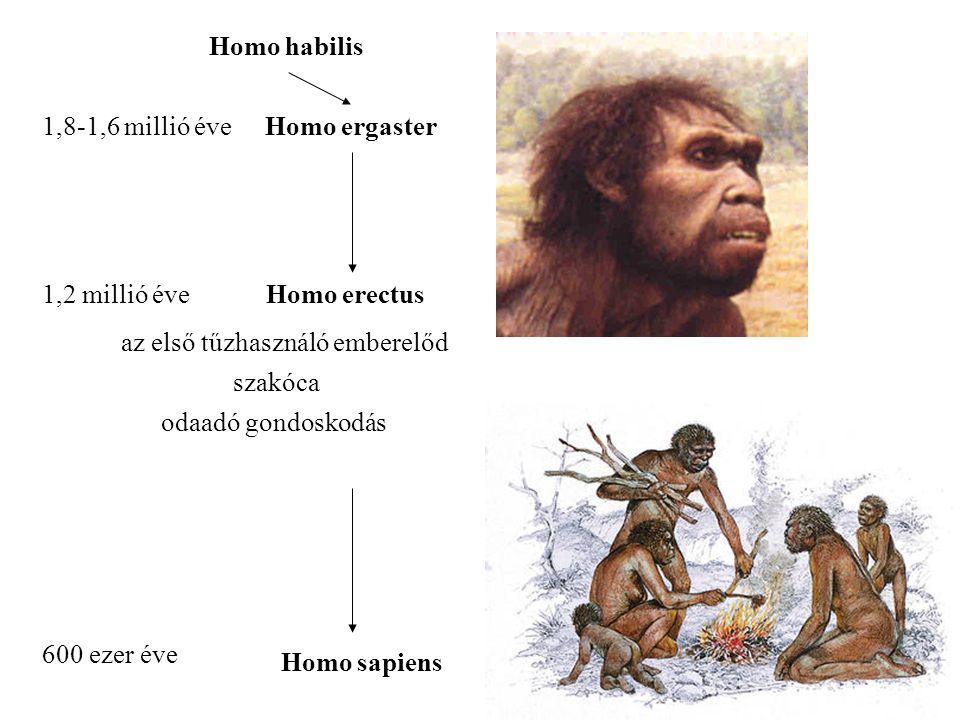 Homo habilis 1,8-1,6 millió éveHomo ergaster 1,2 millió éveHomo erectus az első tűzhasználó emberelőd 600 ezer éve Homo sapiens szakóca odaadó gondoskodás