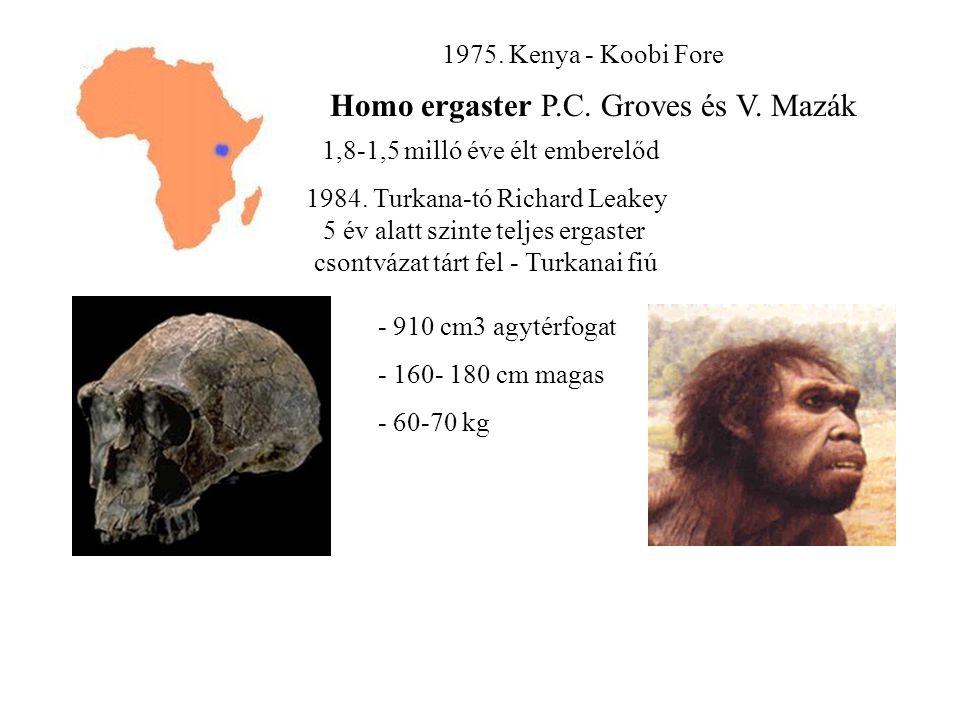 1975.Kenya - Koobi Fore Homo ergaster P.C. Groves és V.