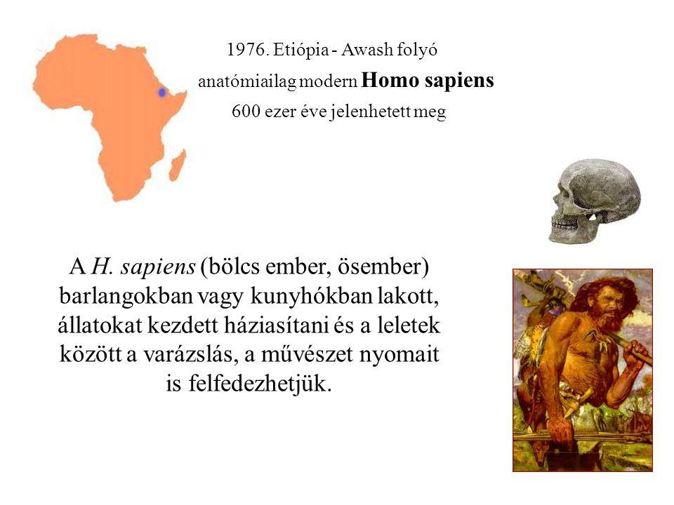 1976.Etiópia - Awash folyó anatómiailag modern Homo sapiens 600 ezer éve jelenhetett meg A H.