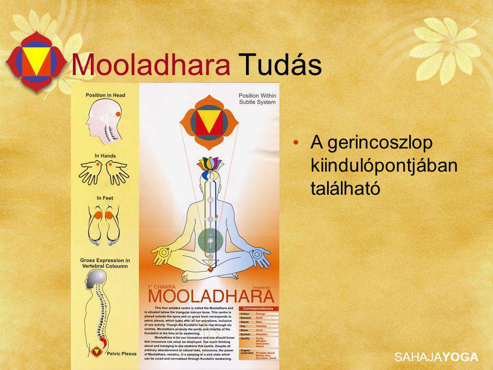 SAHAJAYOGA Mooladhara Tudás A gerincoszlop kiindulópontjában található