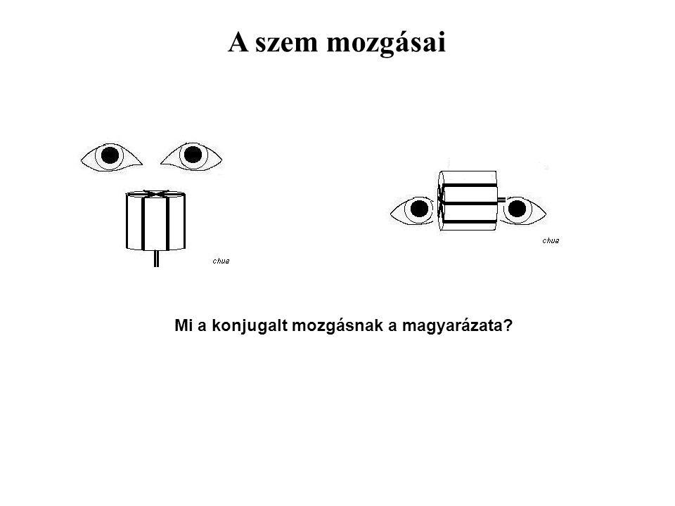 A szem mozgásai Mi a konjugalt mozgásnak a magyarázata?