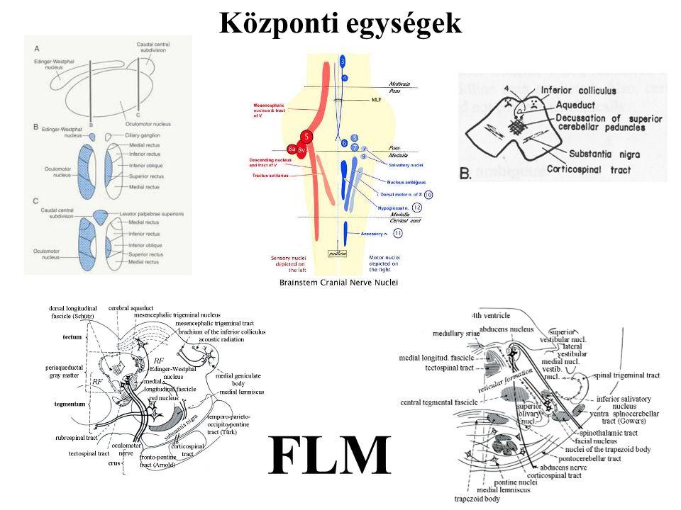 Központi egységek FLM