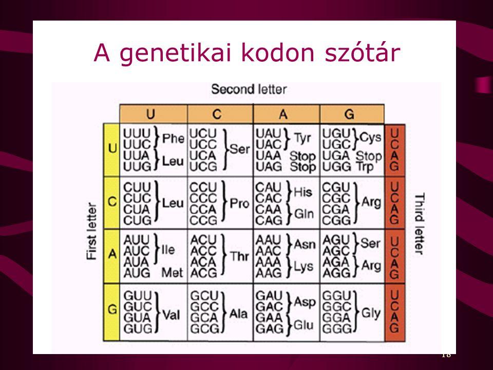 18 A genetikai kodon szótár