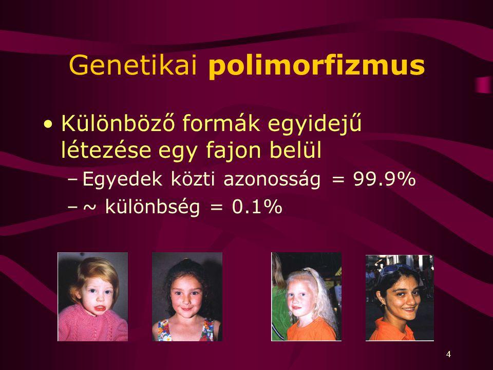 4 Genetikai polimorfizmus Különböző formák egyidejű létezése egy fajon belül –Egyedek közti azonosság = 99.9% –~ különbség = 0.1%