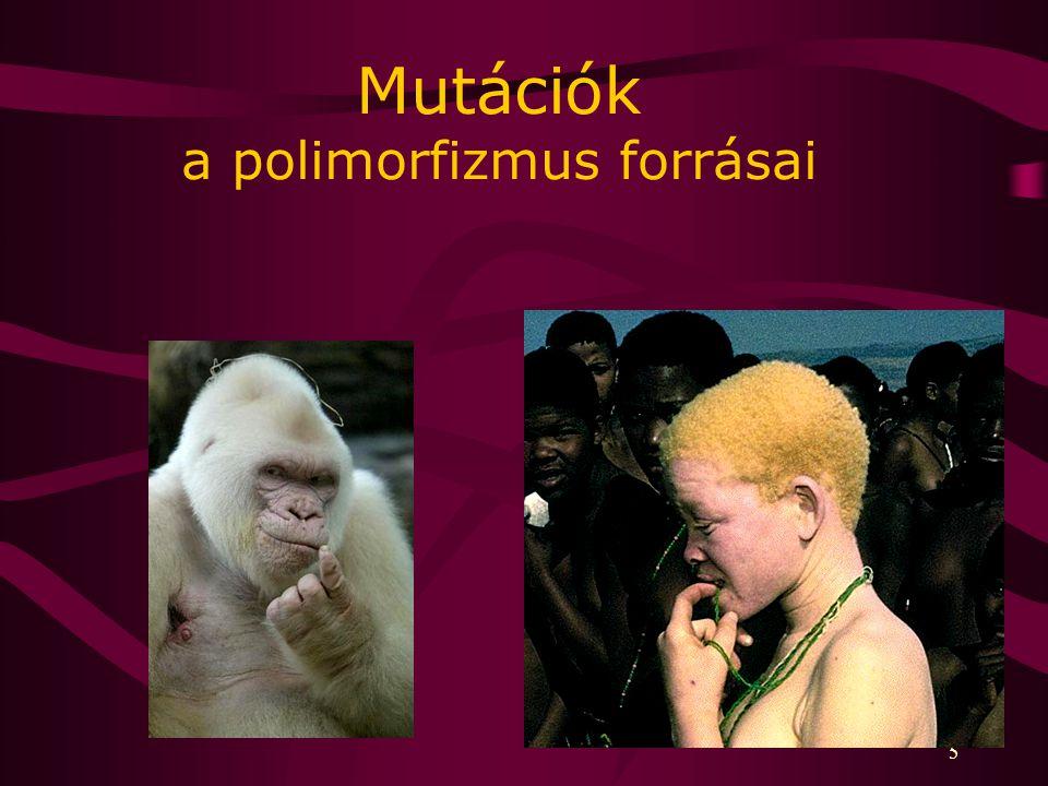 5 Mutációk a polimorfizmus forrásai
