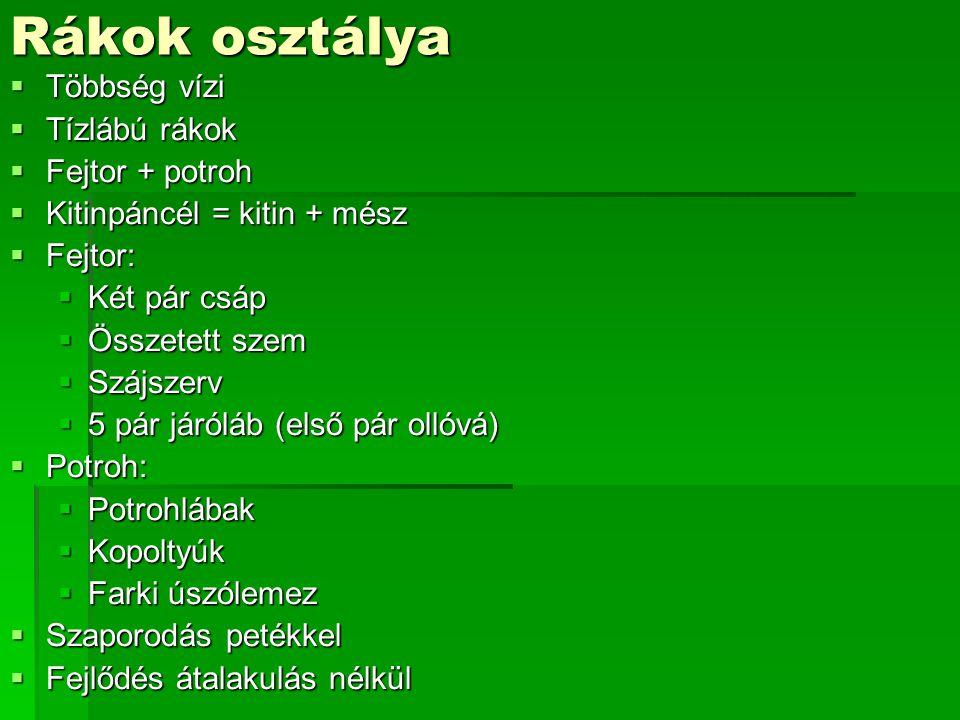 Zöld lombszöcske
