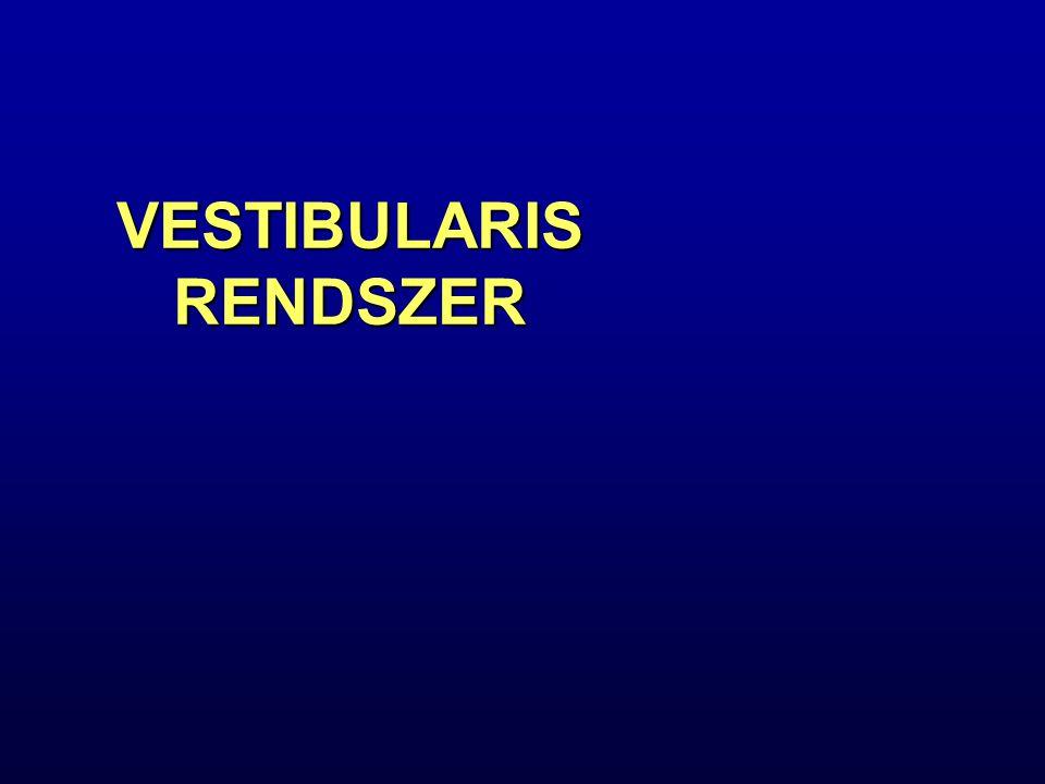 A vertigo leggyakoribb okai Benignus paroxysmalis positionalis vertigo (BPPV) Benignus paroxysmalis positionalis vertigo (BPPV) Phobiás szédülés Phobiás szédülés Centralis vestibularis szédülés (VBI, SM) Centralis vestibularis szédülés (VBI, SM) Basilaris vestibularis migrain Basilaris vestibularis migrain Perifériás vestibulopathia (neuronitis vestibularis) Perifériás vestibulopathia (neuronitis vestibularis) Morbus Meniere Morbus Meniere Psychogen szédülés Psychogen szédülés Bilateralis vestibulopathia Bilateralis vestibulopathia Labyrintus fistula Labyrintus fistula