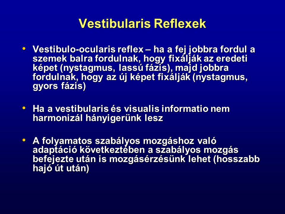 Vestibularis Reflexek Vestibulo-ocularis reflex – ha a fej jobbra fordul a szemek balra fordulnak, hogy fixálják az eredeti képet (nystagmus, lassú fá