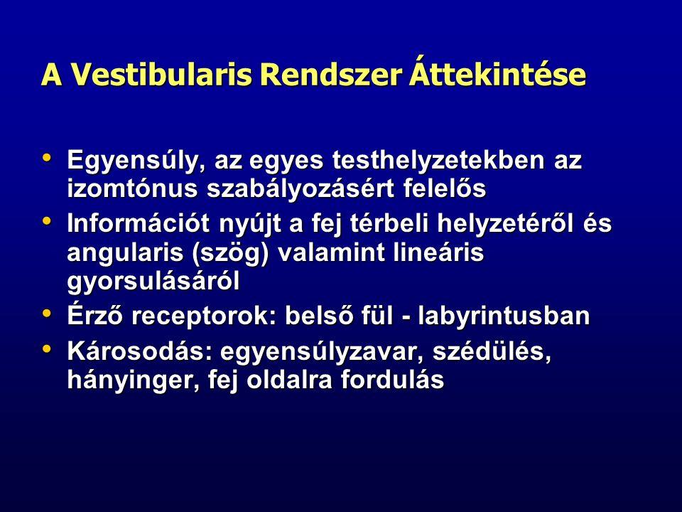 Vestibularis Reflexek Vestibulo-ocularis reflex – ha a fej jobbra fordul a szemek balra fordulnak, hogy fixálják az eredeti képet (nystagmus, lassú fázis), majd jobbra fordulnak, hogy az új képet fixálják (nystagmus, gyors fázis) Vestibulo-ocularis reflex – ha a fej jobbra fordul a szemek balra fordulnak, hogy fixálják az eredeti képet (nystagmus, lassú fázis), majd jobbra fordulnak, hogy az új képet fixálják (nystagmus, gyors fázis) Ha a vestibularis és visualis informatio nem harmonizál hányigerünk lesz Ha a vestibularis és visualis informatio nem harmonizál hányigerünk lesz A folyamatos szabályos mozgáshoz való adaptáció következtében a szabályos mozgás befejezte után is mozgásérzésünk lehet (hosszabb hajó út után) A folyamatos szabályos mozgáshoz való adaptáció következtében a szabályos mozgás befejezte után is mozgásérzésünk lehet (hosszabb hajó út után)