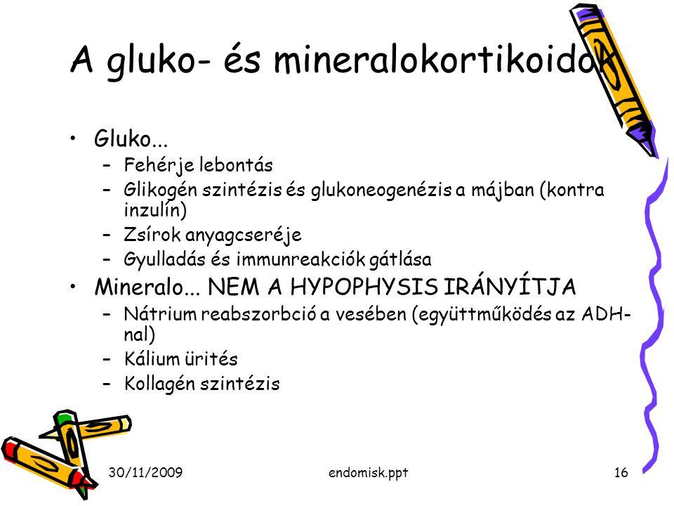 30/11/2009endomisk.ppt16 A gluko- és mineralokortikoidok Gluko... –Fehérje lebontás –Glikogén szintézis és glukoneogenézis a májban (kontra inzulín) –
