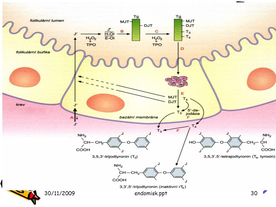 30/11/2009endomisk.ppt30 Syntéza hormonov štítnej žľazy Obr 26.11 – s. 412