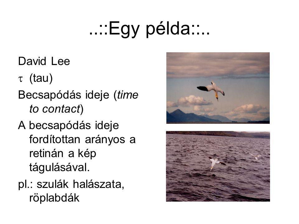 ..::Egy példa::.. David Lee  (tau) Becsapódás ideje (time to contact) A becsapódás ideje fordítottan arányos a retinán a kép tágulásával. pl.: szulák