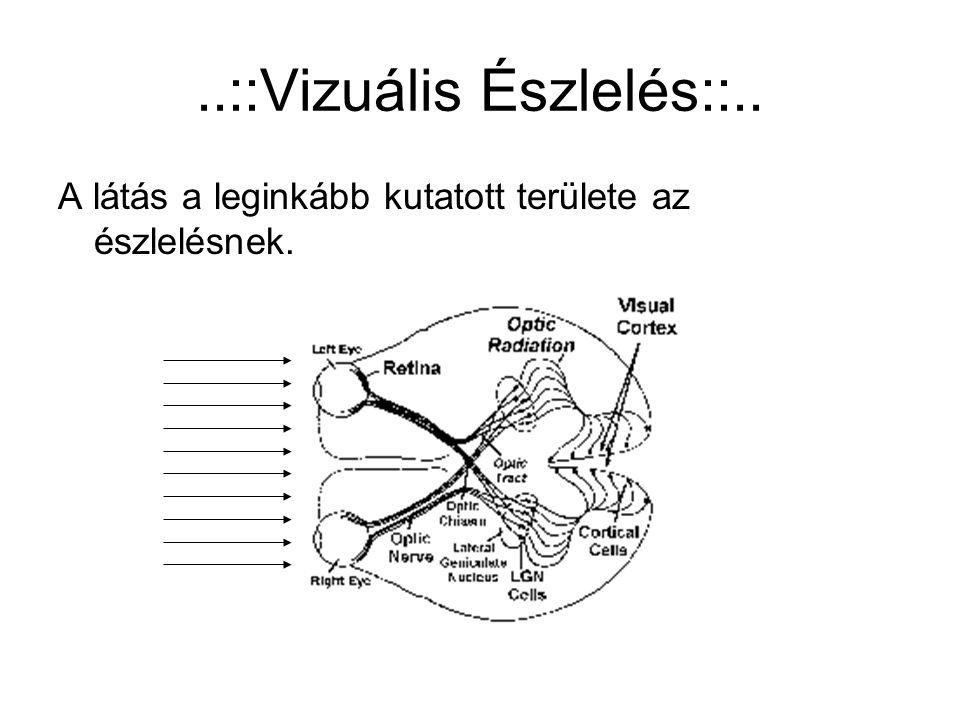 ..::Vizuális Észlelés::.. A látás a leginkább kutatott területe az észlelésnek.