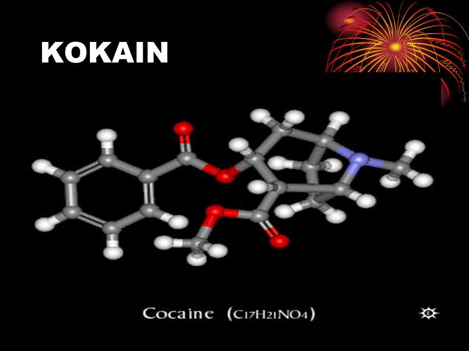 A növény Kokacserje (Erythroxylon coca) leveleit évszázadok óta rágják a dél-amerikai indiánok stimuláló és étvágycsökkentő hatása miatt..