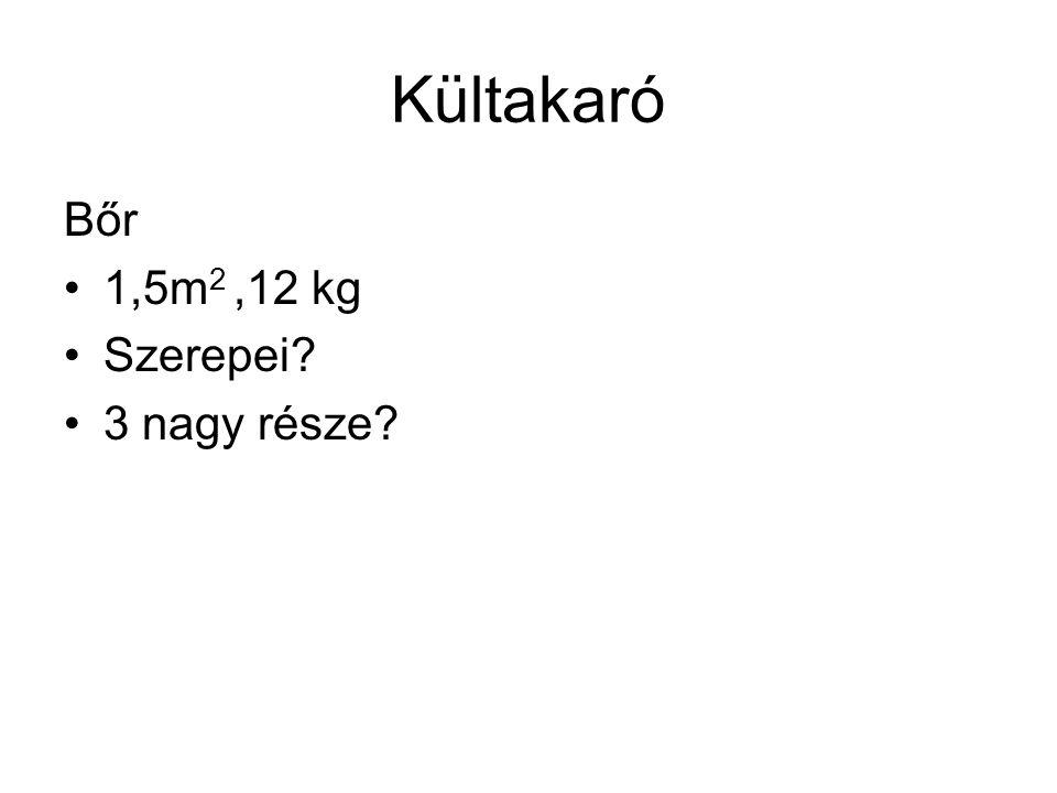 Kültakaró Bőr 1,5m 2,12 kg Szerepei? 3 nagy része?