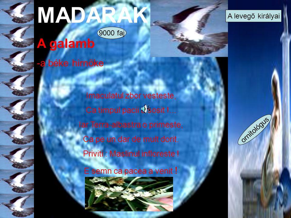 MADARAK A galamb -a béke hirnöke Imaculatul zbor vesteste, Ca timpul pacii a sosit !... Iar Terra-albastra o primeste, Ca pe un dar de mult dorit. Pri