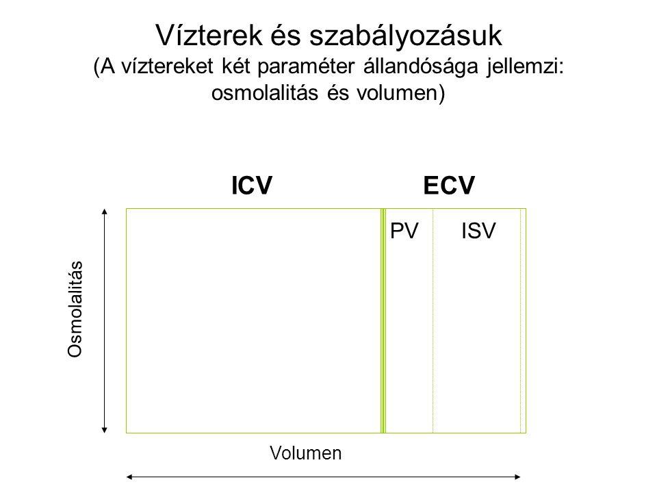 Vízterek és szabályozásuk (A víztereket két paraméter állandósága jellemzi: osmolalitás és volumen) ICVECV PVISV Osmolalitás Volumen